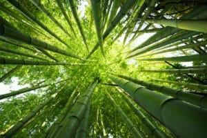 Palmen von unten
